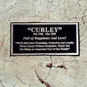 Old Grove Tree Trunk w/ Bronze Plaque. Personalized - Click Image to Close