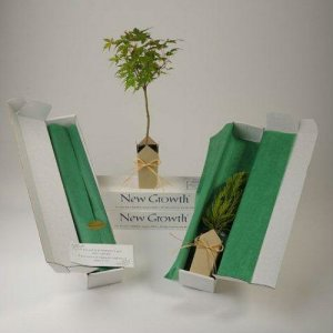 Japanese Green Leaf Maple Gift Tree Box