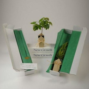 Chinese Dogwood Gift Tree Box (BEST SELLER)