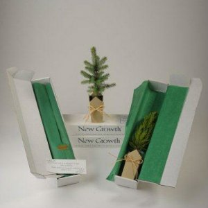 Colorado Blue Spruce Gift Tree Box